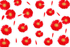 Red flower. Background and texture Royalty Free Stock Images
