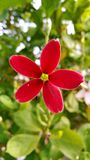 Red flower. Beatue of color stock photos