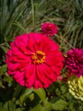 Red flower. Beautiful stock photography