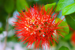 Red flower. Is beautiful daytime Royalty Free Stock Image