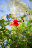 Red flower. Beautiful Red flower on green background Royalty Free Stock Image