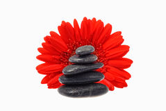 Red flower black stones Royalty Free Stock Images