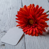 Red flower with blank card Stock Photo