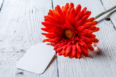 Red flower with blank paper Royalty Free Stock Photo
