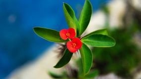 Beautiful red flower at the garden stock image