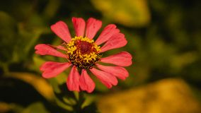 Red flower blooming under the street light. royalty free stock image