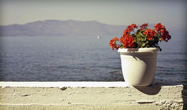Red flower with blue sea background with copy Stock Photos