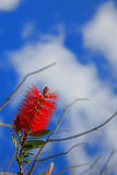 Red Flower & Blue Sky Stock Photo