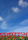 Red flower and blue sky Stock Photos