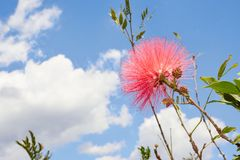 Red flower with a blue sky contrast royalty free stock photo