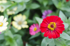 Red flower on blurred background. In the park Stock Images