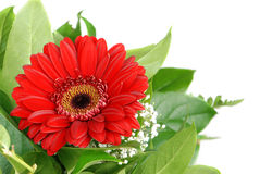 Red flower bouquet royalty free stock photography