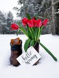 Red Flower Bouquet on Brown Leather Boots during Snow Weather Royalty Free Stock Images