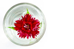 Red flower in a bowl of water Royalty Free Stock Images