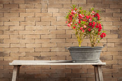 Red flower and brick wall background Stock Photo