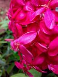 Red flower bunche Stock Photography