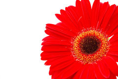 Red flower close up Stock Photo