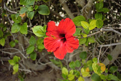 Red flower closeup. stock photography