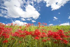 Red flower community Royalty Free Stock Images