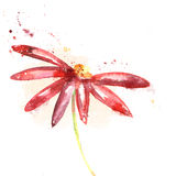 Beautiful summer red flower, watercolor illustrati. Cute red watercolor flower for greeting cards Stock Photography