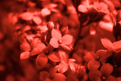 Red Flower Detail Stock Images