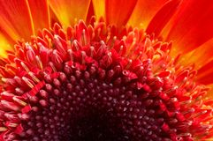 Red flower - extreme macro Stock Photo