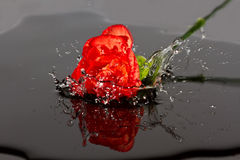 Red flower fall in water Stock Photos