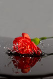 Red flower fall in water Stock Images