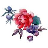 Red flower. Isolated flower illustration element. Background illustration set. Watercolour drawing aquarelle bouquet. Red flower. Floral botanical flower stock illustration