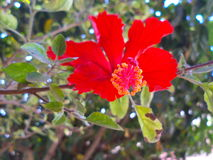Red flower. Flowers of winters Royalty Free Stock Images