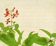 Red Flower And Foliage on Bamboo Stock Image