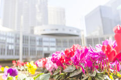 Red flower foreground with goverment building in Japan backgroun Royalty Free Stock Image