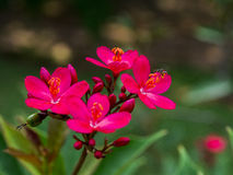 Red flower. Fragile delicate red flower and small insects Royalty Free Stock Photos