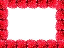 Red flower frame. Frame made of red bloody flowers on the white background stock photo