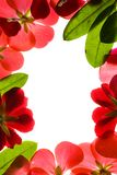 Red Flower Frame. Red Floral Frame Isolated On White Royalty Free Stock Photography