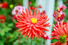 red flower in fresh green Royalty Free Stock Photos
