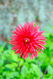 Red flower in fresh green Stock Photo