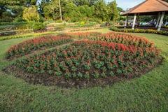 Red flower in  garden Stock Photos