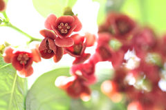 Red flower at garden. Royalty Free Stock Images