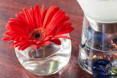Red flower in a glass vase Royalty Free Stock Images