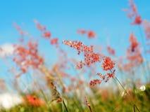 Red flower. Grass red flower in garden Stock Photos