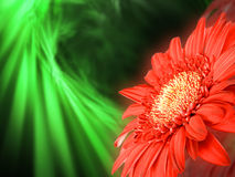 Red flower on green backdrop Royalty Free Stock Photography
