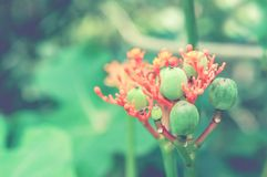 Red flower and green fruit spring nature wallpaper background. Red flower and green fruit   ,Abstract spring nature wallpaper  background stock image