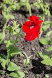 Red flower with green grass royalty free stock photos