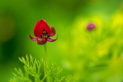 Red flower in a green grass field. Natural floral vintage background Stock Image