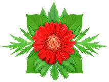 Red flower with green leaf Stock Photos