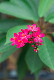 Red flower with green leaf on blurred background Stock Images
