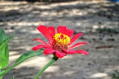 Red flower on the green leaves HD wallpaper background. With the blured background royalty free stock photo
