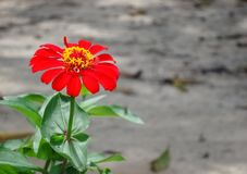 Red flower on the green leaves HD wallpaper background. With the blured background stock photos