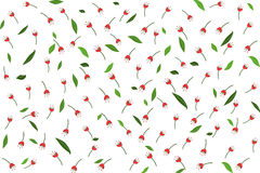 Red flower and green leaves seamless pattern for your wallpaper Royalty Free Stock Images